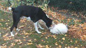 Tiervermittlungshilfe – Tiere suchen ein Zuhause