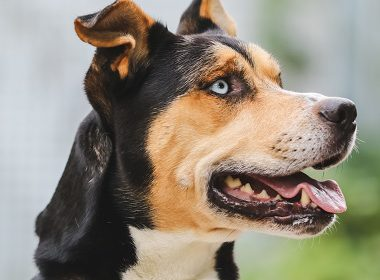 Tiervermittlungshilfe – Tiere suchen ein neues Zuhause Rocki