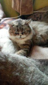 Ju - Katze 3 -Tiervermittlungshilfe