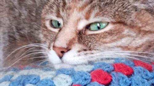 kory - Katze 4 -Tiervermittlungshilfe